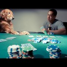 dog and man playing poker funny photo