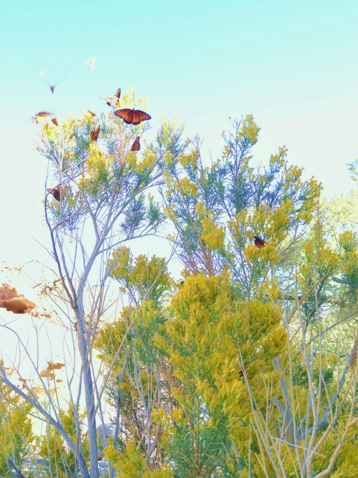 butterflies near the Arizona hot springs
