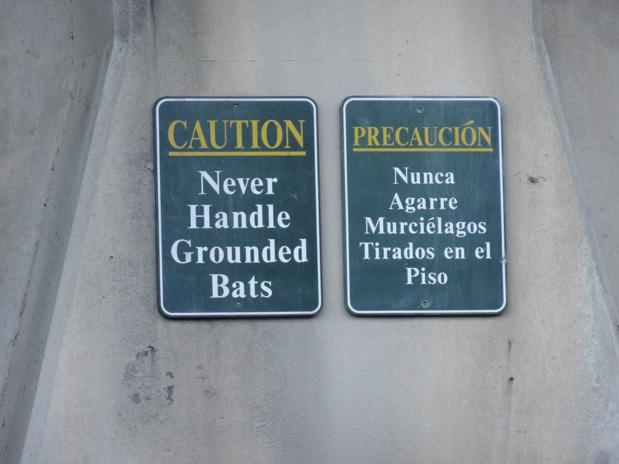 """""""Never handle grounded bats"""" sign under South Congress bridge in Austin Texas"""