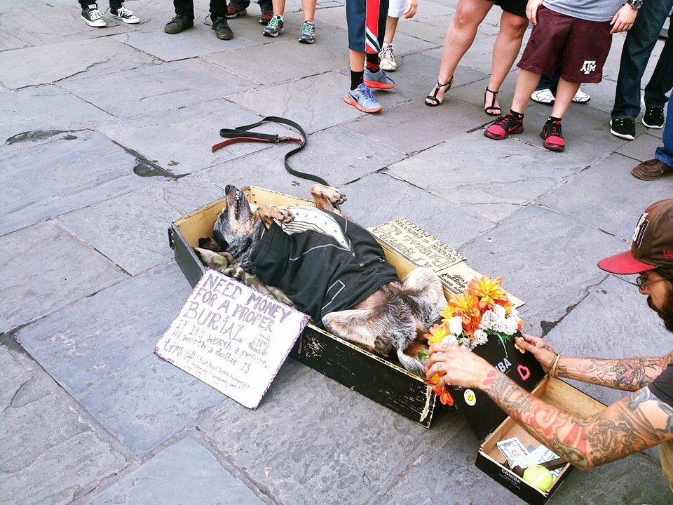 funny photo of dog playing dead in a fake casket
